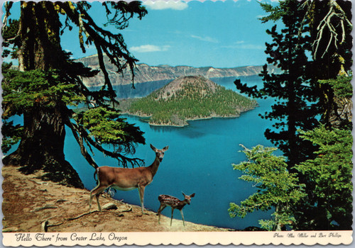deer at crater lake