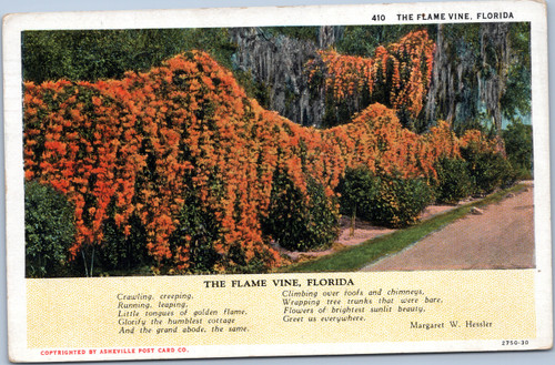 The Flame Vine