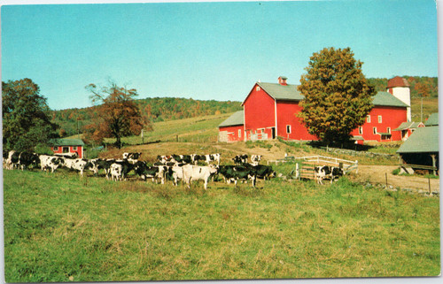 Cows in pasture with Barn