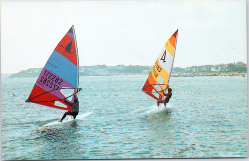 people windsurfing