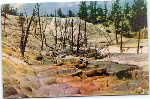 Mammoth Hot Springs Terraces at Yellowstone