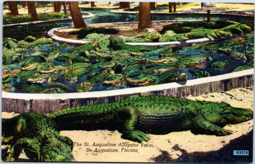 St Augustine alligator farm