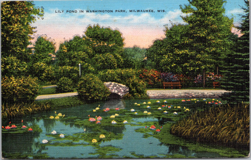 Lily Pond in Washington Park