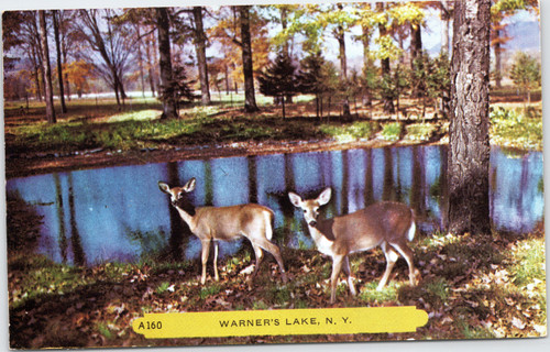 Deer at Warner's Lake New York