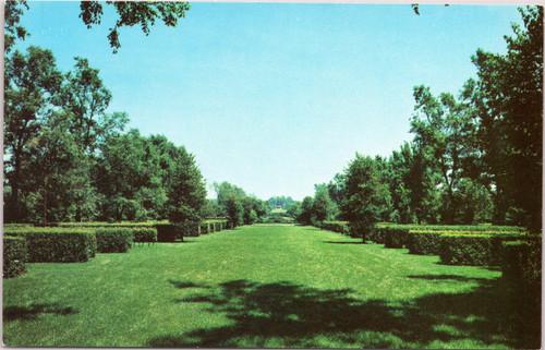 Morton Arboretum Hedge Garden