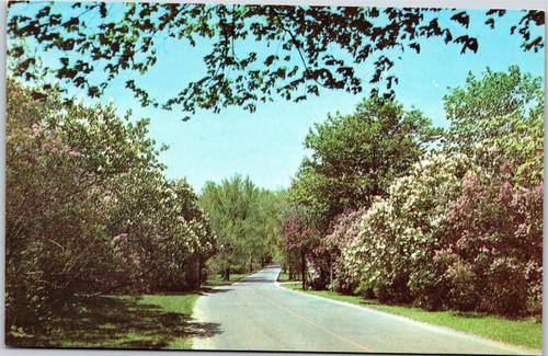 Morton Arboretum Lilacs at entrance