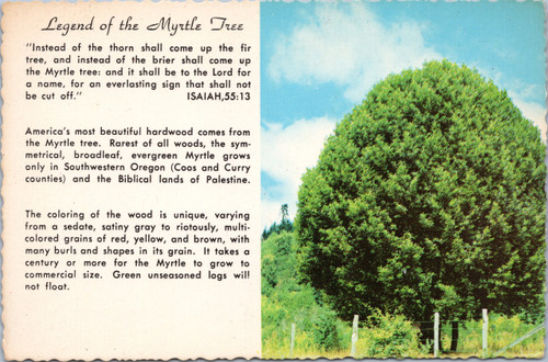 Legend of the Myrtle Tree