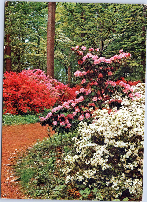 Azaleas and Rhodendron at The Gardens of Winterthur