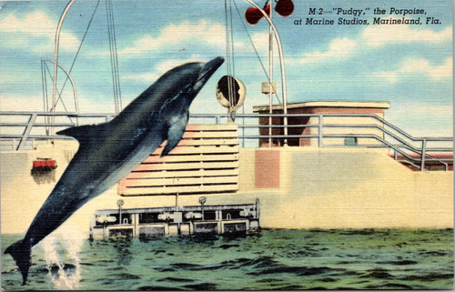 Pudgy the Porpoise at Marine Studios