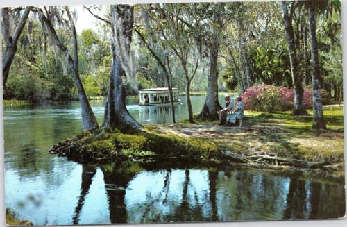 Along Silver Springs River Florida