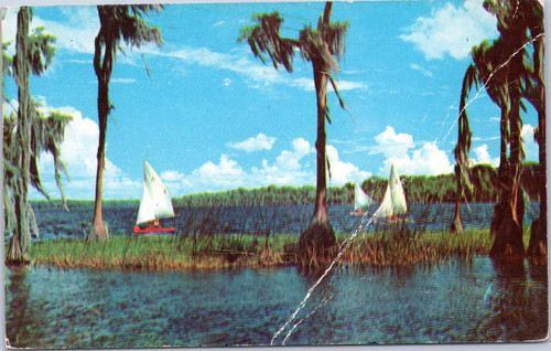 Sailboats on Lake Sante Fe near Gainesville