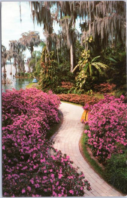 Cypress Gardens - Azalea lined path