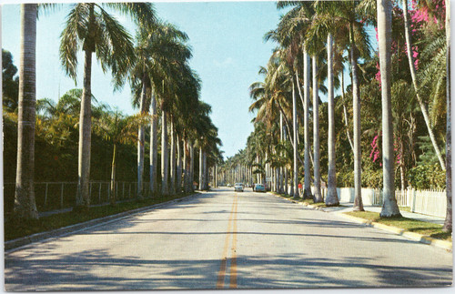 Avenue of Palms Fort Myers