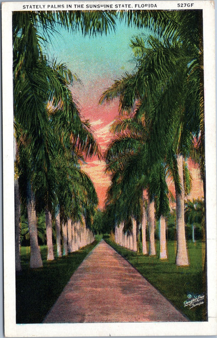 Stately Plams in the Sunshine State, Florida