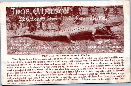 Thos C. Imeson Curio shop advertisement Old Joe, sassiest aligator