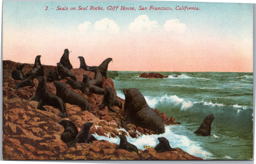 Seals at Cliff House San Francisco