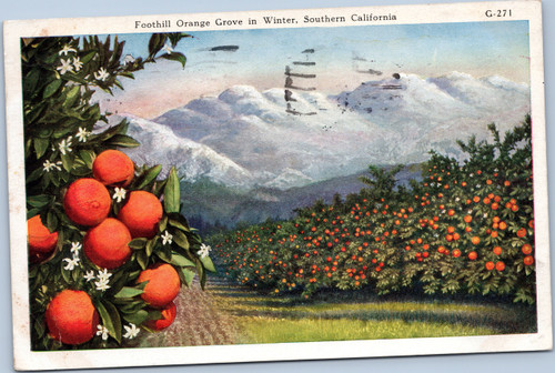 Foothill Orange Grove in Winter, Southern California