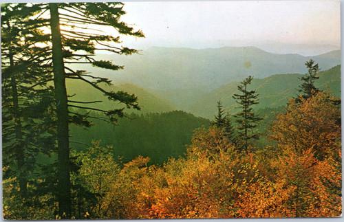 Fall foliage scene
