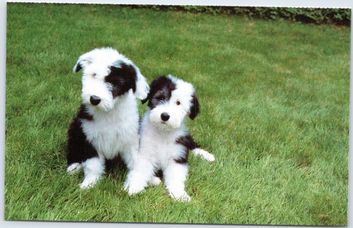 Black and white dogs in grass