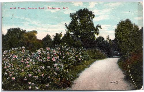 Wild Roses, Seneca Park, Rochester, New York