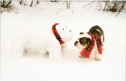 Bulldog with snowman dog