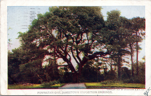 Powhatan Oak, Jamestown Exposition Grounds