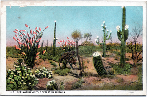 Springtime on the Desert in Arizona