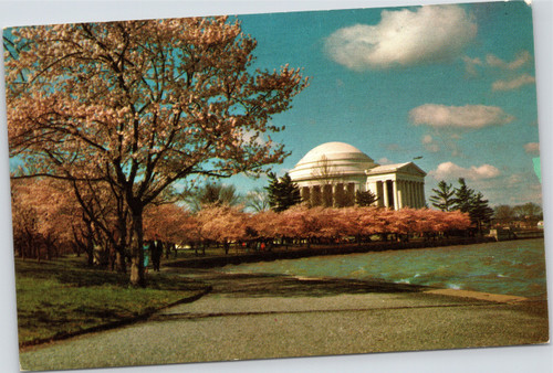 Jefferson Memorial rising through Cherry Blossoms