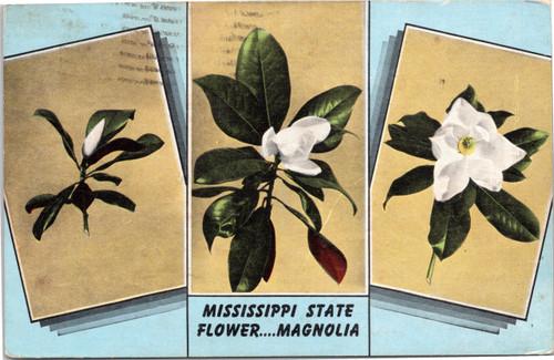 Mississippi State Flower….Magnolia