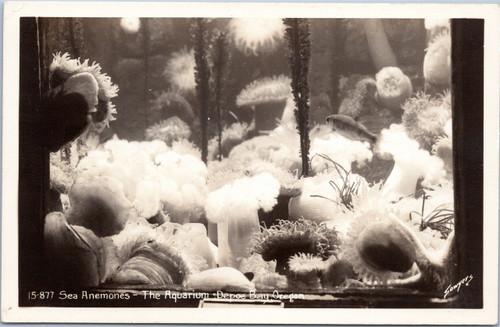Sea Anemonies at The Aquarium - Depoe Bay Oregon