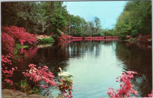 Bellingrath Gardens - Swan on Mirror Lake