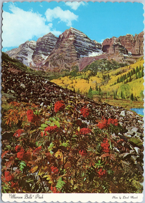 Maroon Bells - autumn hues of Aspen and Baneberry plant