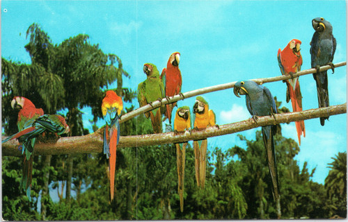Macaws at Sarasota Jungle Gardens