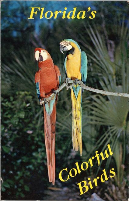 Florida Macaws