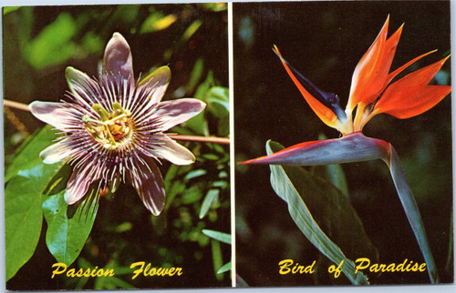 Passion Flower and Bird of Paradise