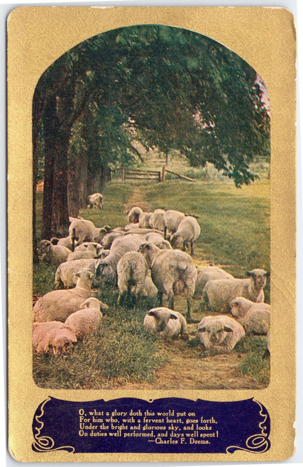 Sheep and Charles Deems poem