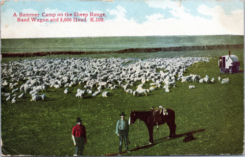 Summer Camp on the Sheep Range