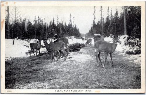 Deer pack in forest