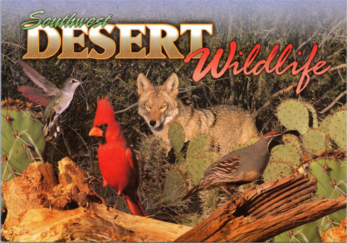 Southwest Desert Wildlife