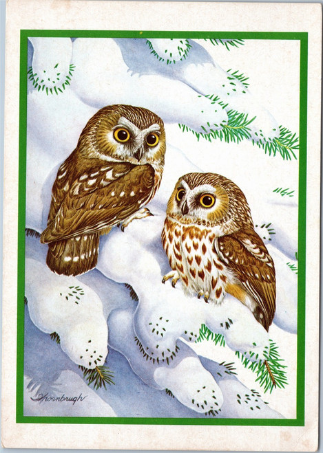 Owls in snow