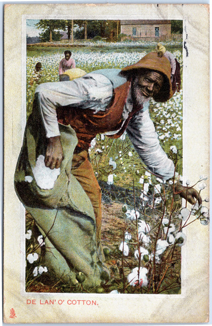 Black man picking cotton