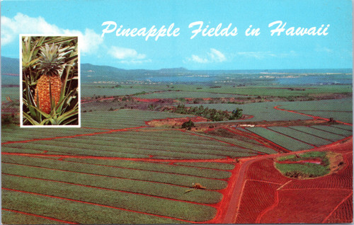 Dole Pineapple Fields