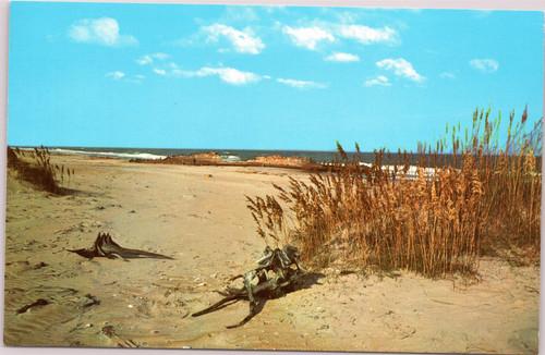 Outer Banks - Sea Oats, driftwood, shipwreck