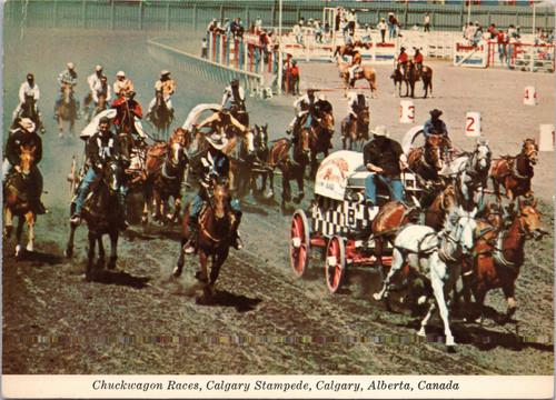 Chuckwagon Races, Calgary Stampede