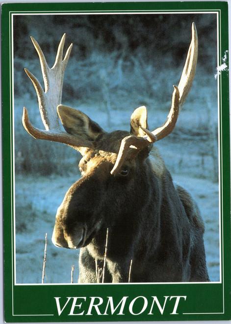 Vermont - Bull Moose
