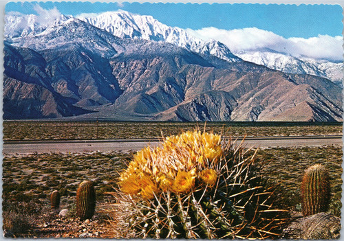 barrel cactus blossom