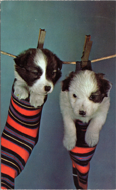 puppies in socks