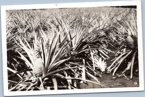 RPPC Pineapple Hawaii