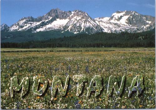 Camas Flowers Montana