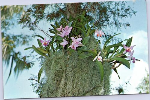 cypress gardens florida